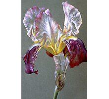 Flag Iris Photographic Print