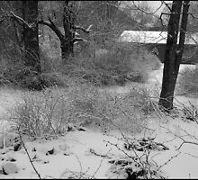 """Winter without Color by Scott """"Bubba"""" Brookshire"""