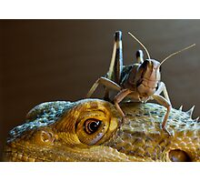 Safety - Bearded Dragon with Locust Photographic Print