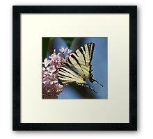 Sail Swallowtail Framed Print