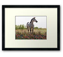 Field of Flowers In Texas Framed Print