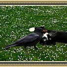 ☆ º ♥ `•.¸.•´ ♥ Crow Feeding Kitten~ Best Friends ☆ º ♥ `•.¸.•´ ♥ by ✿✿ Bonita ✿✿ ђєℓℓσ