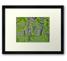Views: 2369 . My Green Day . by Brown Sugar . Featured * . This image Has Been S O L D .  .WoW !!! .   How wonderful !!! thank you !!! Happy Easter Friends !!! Framed Print