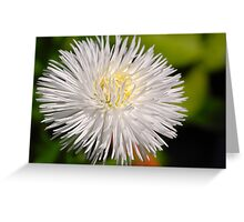 Daisy V Greeting Card