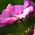 Pelargonia's Morning Shower by SmoothBreeze7