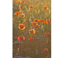 Golden moment . Psychodelic opium poppy delusion landscape. by Brown Sugar. Yeah !!! Views (336)  favorited by (1) Thank you very much !!! Waaaaws  !!! Photographic Print