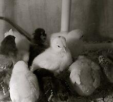 Spring Chickens by Joy Fitzhorn