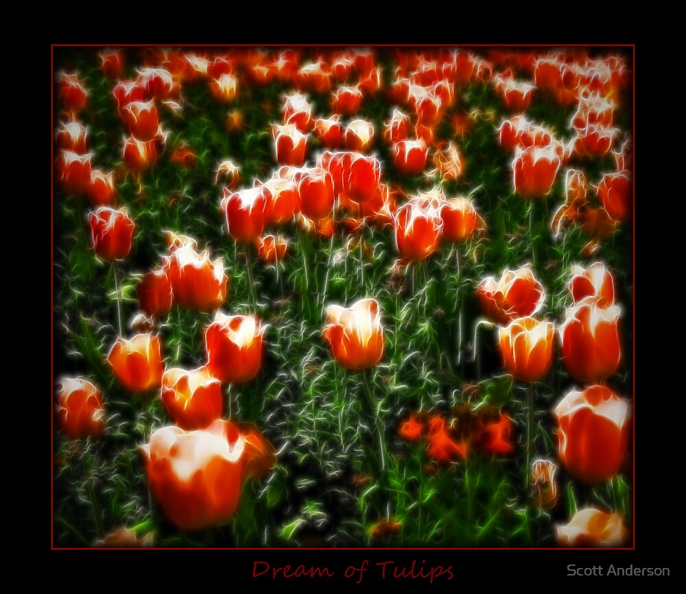 Dream of Tulips by Scott Anderson