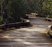 Mangrove Boardwalk by Joy Rensch
