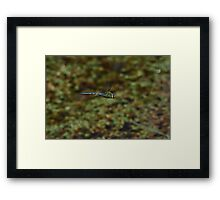 The flight of the dragonfly  3488 Framed Print