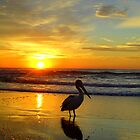 Pelican at Sunrise, Manly Beach, Sydney, NSW, Australia by Of Land & Ocean - Samantha Goode