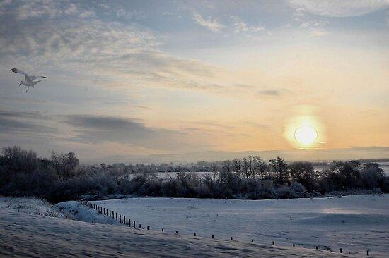 Snowy scene. by albutross