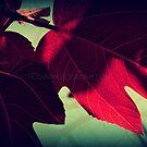 Fig Leaves by Hazel Dean