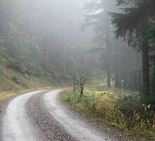 Foggy forest road by Rene  Eveland