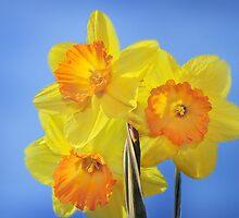 Trumpeting Spring by Corinne Noon