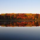 A Fall Color Palette by Michele Jensen