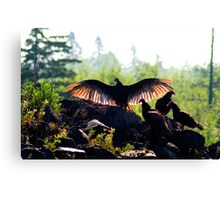 A Wake of Vultures Canvas Print
