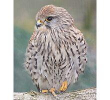 British Wildlife Centre Photographic Print