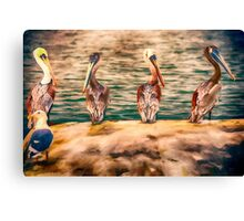 The Pelican Four Stooges Canvas Print