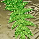 Fern Frond Fossil by Margaret Stevens
