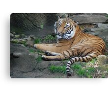 Restful Day Canvas Print