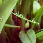 For a Rainy Day by margosnyderart