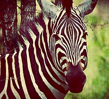 { majestic zebra II } by Brooke Reynolds