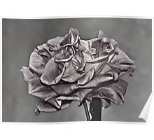 """ Renaissance Rose "" Poster"