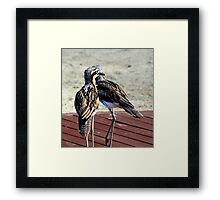Curlew Framed Print