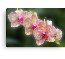 A Stem of Orchids Canvas Print