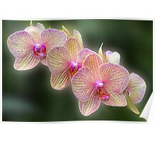 A Stem of Orchids Poster