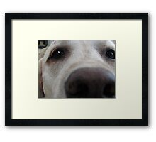 Nosy Dogs Framed Print