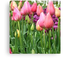 rainy tulips Canvas Print