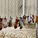 Gloves Hung Out To Dry by Barb Miller