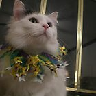 Jaden's ready for Mardi Gras by Unconventional