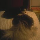 Oreo facing off with Louie by dmcfadden