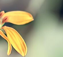 Do Not Hide Your Beauty - Nature is always perfect by Komang