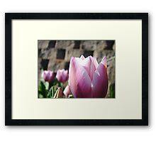 Floral Tulip Flower Garden art Baslee Troutman Framed Print