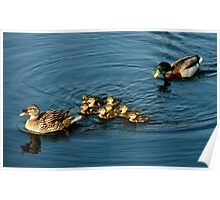 Mama Daddy and Baby Ducks Poster