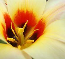 Tulip Flower art prints Creamy Yellow Orange Floral Baslee Troutman by BasleeArtPrints