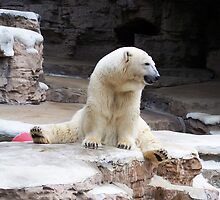 Polar Bear V- Regal Pose by Unconventional