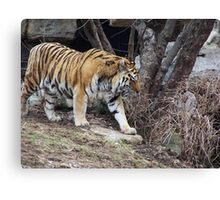 Amur Tiger V Canvas Print