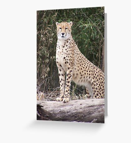 Cheetah IV- What You Did There, I See It. Greeting Card