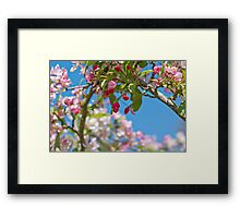 Meet Me Under The Cherry Tree Arch Framed Print