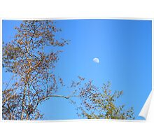 Moon Conversing With Trees Poster