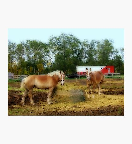 Farm Life Photographic Print
