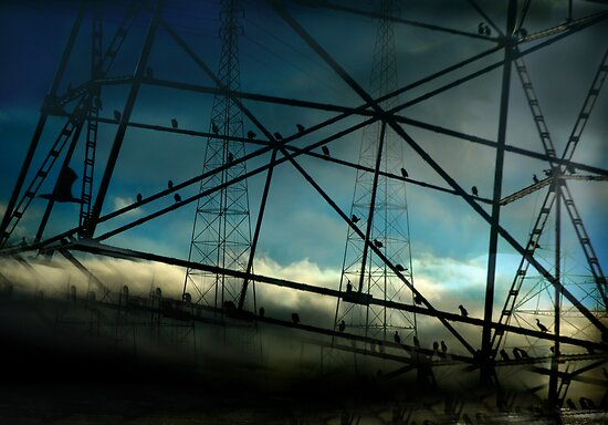 Birds on a Wire by linaji