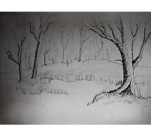 THE DAY RECEDES - a forest meander Photographic Print