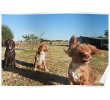 Paddy the one eyed toller and friends Poster