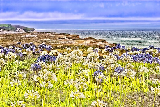 Flowers by the sea, Pescadero, CA by vincefoto